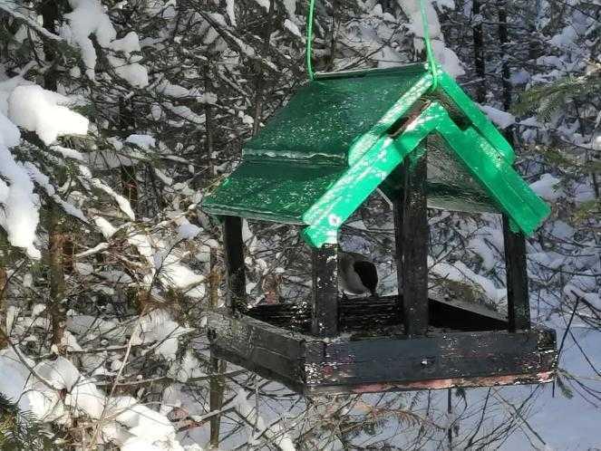 В национальном парке «Таганай» открыли «птичьи столовые»