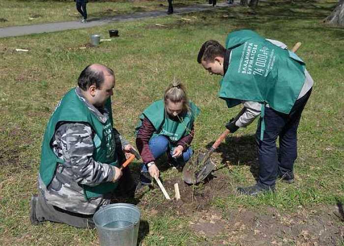 ВЧелябинске высадили две аллеи знаменитых даурских лиственниц